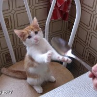 Где моя большая ложка ? 3 :: OLLES