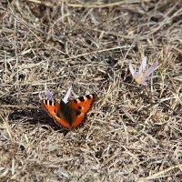 Февральская бабочка :: Светлана Попова