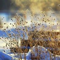 Солнечный момент морозного утра... :: Анастасия Гаряева
