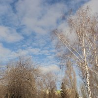 Весна витает в воздухе... :: марина ковшова