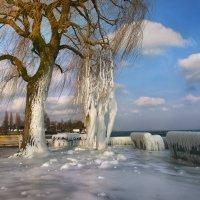 Мороз и солнце :: Elena Wymann