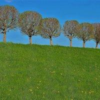 Деревья Марлинского Вала... :: Sergey Gordoff