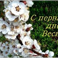 С первым днём Весны, дорогие друзья!. :: Нина Корешкова