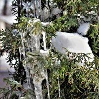Хрусталь зимы :: Марина