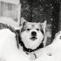Снежно :: Виктория Большагина