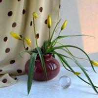 Здравствуй, Весна! :: Татьяна Смоляниченко