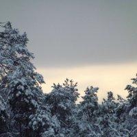Замолкло всё...Мороз не шутит... :: veilins veilins