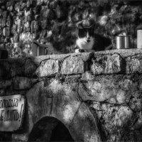 Про кота, который охранял колодец... :: Вера Катан