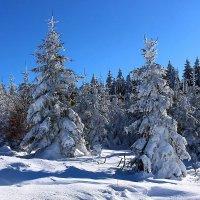 Прощай зима. :: Юрий. Шмаков