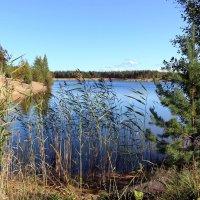 У озера :: Ольга