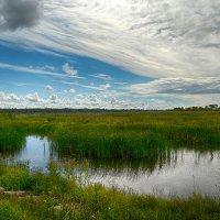 Исток реки Нарва :: Priv Arter