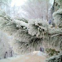 Слегка нас удивил мороз до минус 28 в начале марта..Пришёл марток-надевай трое порток!)) :: Андрей Заломленков