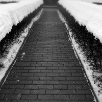 Снегокуст :: Alex Sash