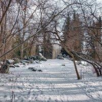 Дендропарк - отличное место для приятных прогулок. :: Пётр Сесекин