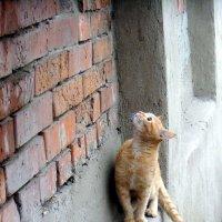 Эй,вы ,там наверху! :: Елизавета Успенская