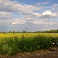Июньское поле :: Elena Gosteva