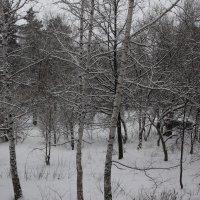 Снег февральский :: Олег Афанасьевич Сергеев