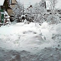 На утро ! (Какие  лыжи ? Будем откапываться!) :: Виталий Селиванов
