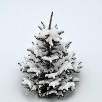 Одинокая елочка в снежном безмолвии... :: Александр