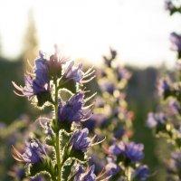 Цветы :: Анна Ермошина