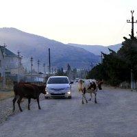 Священные животные в Крыму. :: Геннадий Валеев