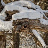 Чудище-Снежище :: Андрей Дворников