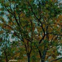 уютный лес,как он там без меня? :: Роза Бара