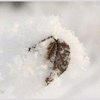 Лист в пушистом снегу. :: Марина Никулина
