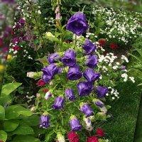 Вальс цветов :: Freddy 97