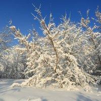 Еще ннмного зимы :: Ninell Nikitina