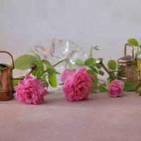 Розовые розы :: Елена Ахромеева