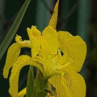Ярко-желтое настроение :: Анастасия сосновская