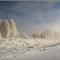 Морозное утро. :: Марина Никулина