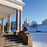 Местные львы (Петродворец) :: Елена