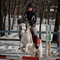 конкур на пони :: Елена Логачева