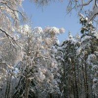 Зима, февраль 2018 г :: Вячеслав