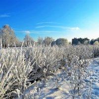 Зимы очарование... :: Sergey Gordoff