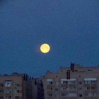 Луна :: Анастасия Боровицкая