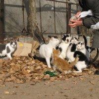Лозунг котов: Любовь приходит и уходит, а кушать хочется всегда... :: Алекс Аро Аро