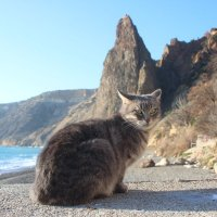 крымский кот :: Elena Gartung