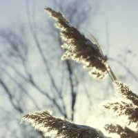 Согретые зимним солнцем :: Оксана Сергеева
