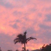 Пальма на  закате :: Инна Крыжановская