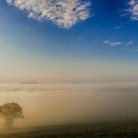 Туман. :: Ирина ...............