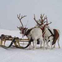 Северные кони :: Дима Валерич