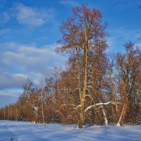Зимний лес :: Седа Ковтун