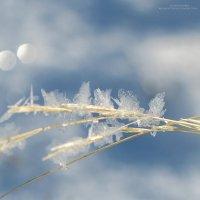 цветы зимы :: Екатерина Агаркова