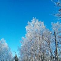 Краски зимы :: Николай
