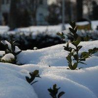 Не взирая на снег и мороз :: Елена Пономарева