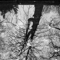 Magic of trees :: alexander zvir