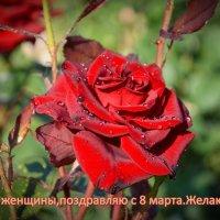С праздником  8 марта.! :: Евгений Кузнецов